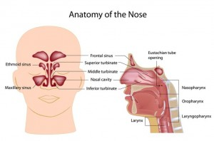 los angeles endoscopic sinus surgeon